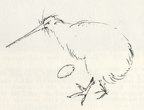 drawing by Marianne Moore of Kiwi and Egg made at Museum of Natural History, New York.